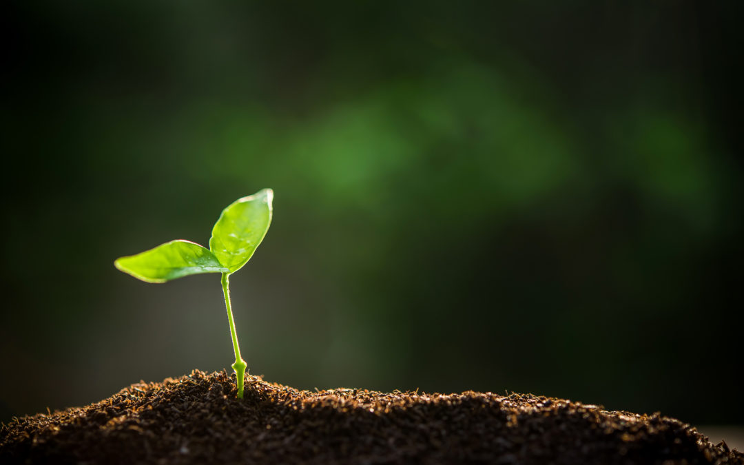 Plant the Seeds for a Lifetime of Learning